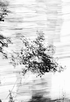 Windblown by Glennis Siverson