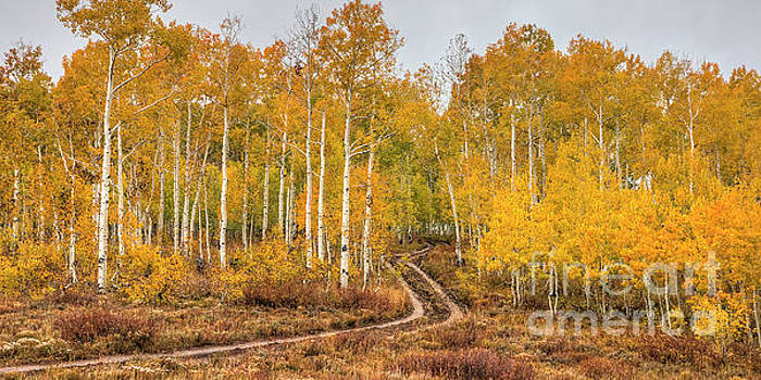 Winding Autumn Road by Spencer Baugh