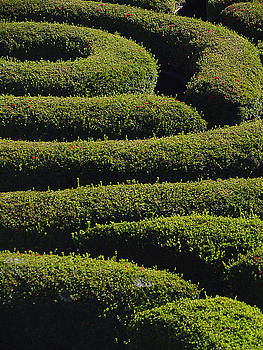 Winding Hedge by Sandy Fisher