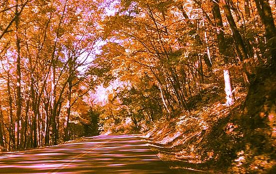 Patricia Taylor - Winding Road in Autumn