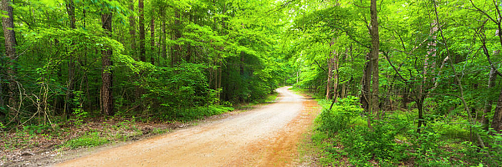 Ranjay Mitra - Winding road with canopy in North Carolina Panorama