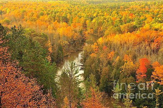 Terri Gostola - Winding Through Autumn