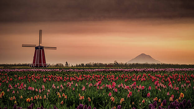 Windmill and Tulips by Don Schwartz