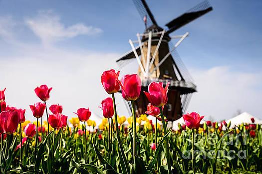 Windmill Island Tulip Gardens by Patrick Shupert
