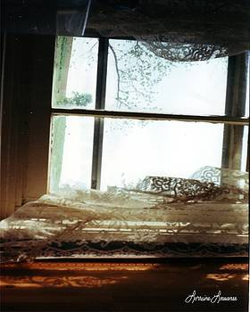 Window and Lace by Lorraine Louwerse