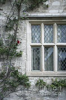 Svetlana Sewell - Window and Rose