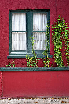 Christopher Holmes - Window and VInes