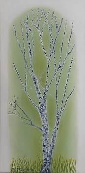Window Birch by Dorothy Merritt