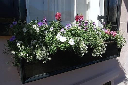 DONNA BENTLEY - Window Box