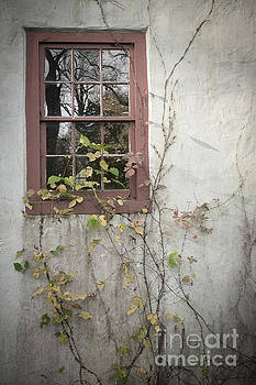 Window by David Rucker