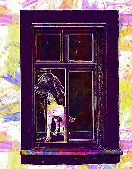 Window Illusion Art Facade  by PixBreak Art