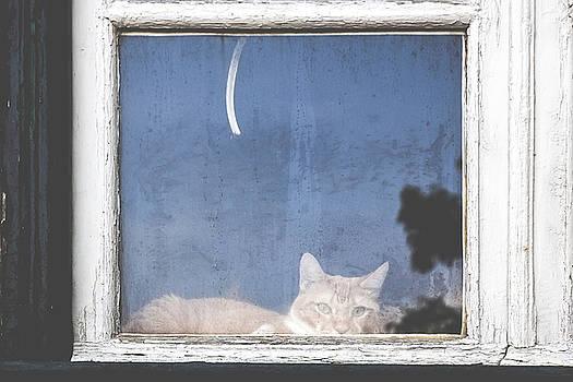 Window in Calcada de Sao Vicente by Andre Goncalves