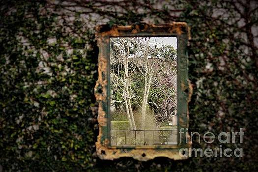 Window In The Woods by Paulette Thomas