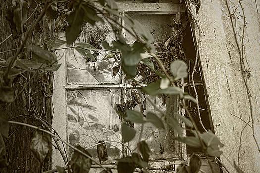 Sharon Popek - Window Less