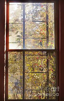 Jonathan Welch - Window Light