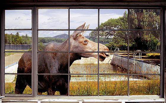 Window - Moosehead Lake by Peter J Sucy