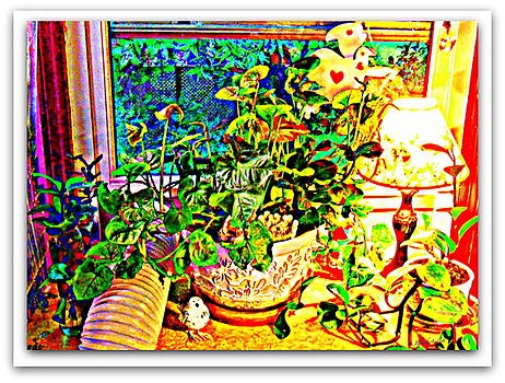 Window Plant by YoMamaBird Rhonda