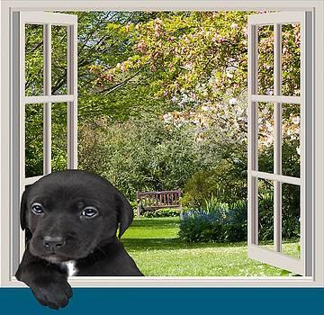 Window Puppy by Cynthia Leaphart