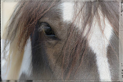 Window To A Horse's Soul by Mick Anderson
