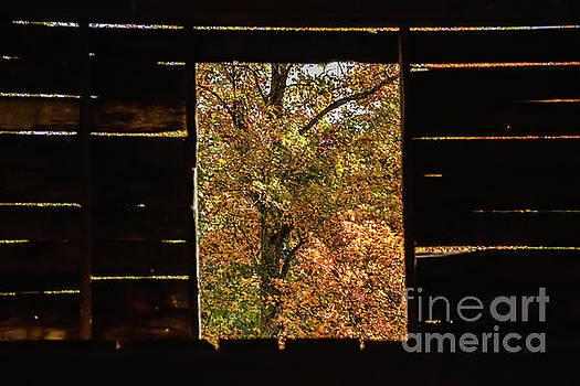 Window View by John Greco