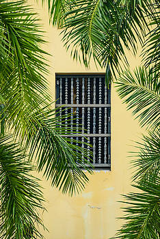 Window with Palm Leaves by Oscar Gutierrez