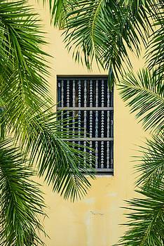 Oscar Gutierrez - Window with Palm Leaves