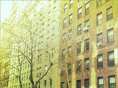 Windows Angle by Joshua Ackerman