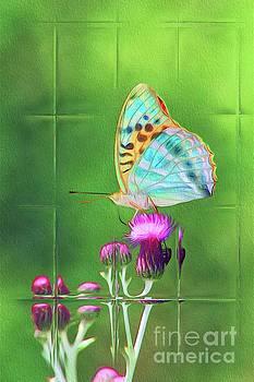Sarah Kirk - Windows on Nature - Butterfly