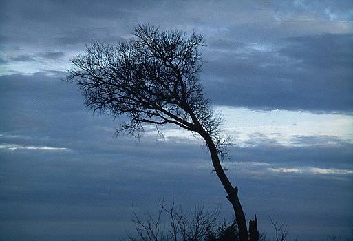 Windswept by Al Junco