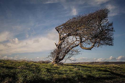 Stewart Scott - Windswept