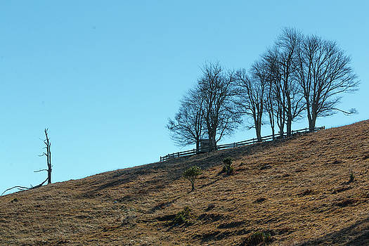 Windswept Trees - December 7 2016 by D K Wall