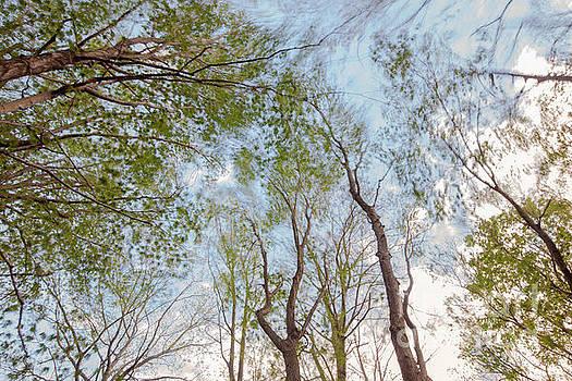 Jonathan Welch - Windy Canopy