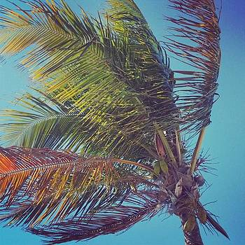 Windy Coconuts! by Sarah Marie