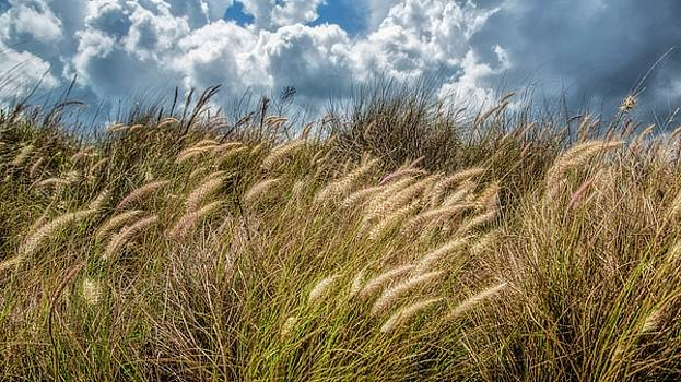Windy Day by Nancie Rowan