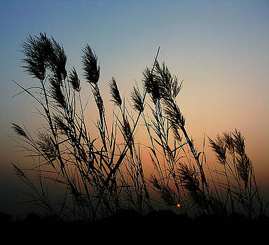 Windy sunset by Atullya N Srivastava