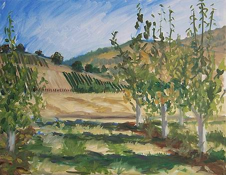 Wine country by Cynthia Riley