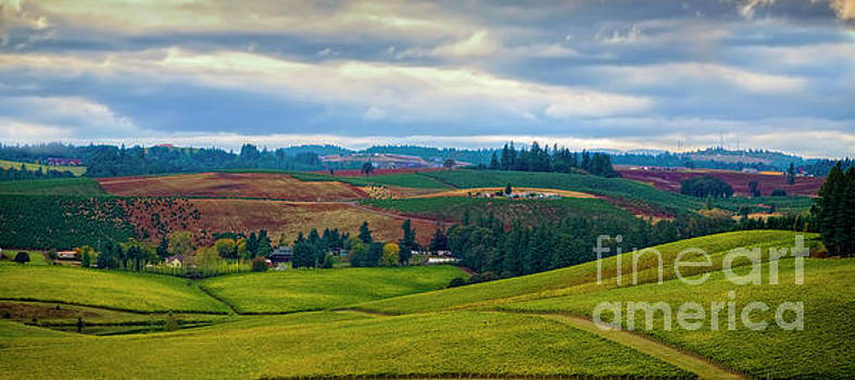 Jon Burch Photography - Wine Country