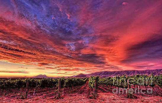 Wine Country Sunset by Beth Sargent