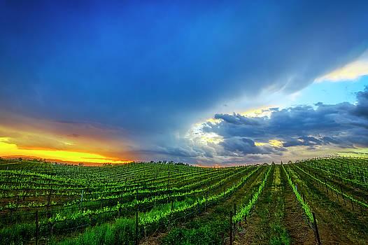Wine Country Vineyard at Sunset by John Moya
