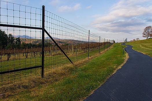 Wine Fields by Michael Tesar
