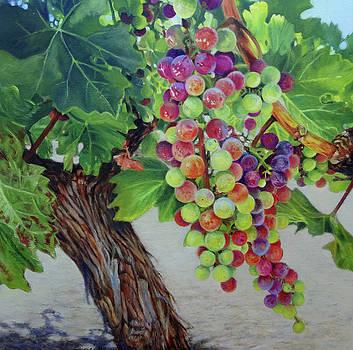 Wine on the Vine #3 by Deborah Plath
