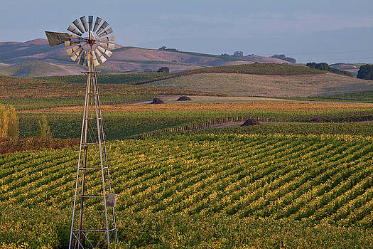 Wine Windmill by Nicole Robinson