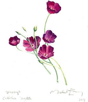 Winecup - Callirhoe Digitata by Michael Earney