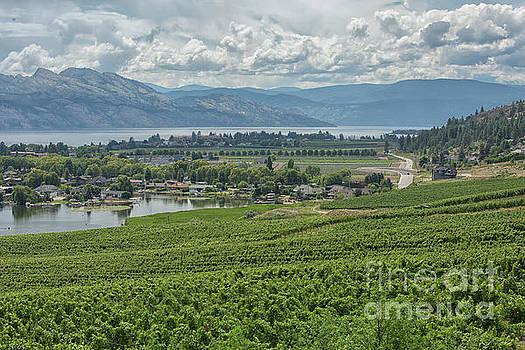 Patricia Hofmeester - Winery View