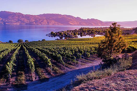 Winery Vista  by Marie  Cardona