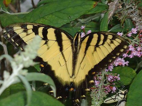 Winged Beauty by Allison Jones