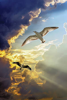 Wings Against The Storm by Brian Wallace