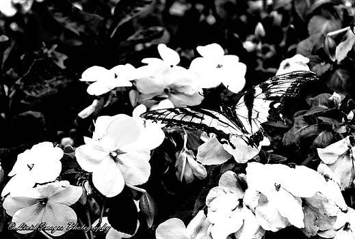 Wings by Kristie Bonnewell