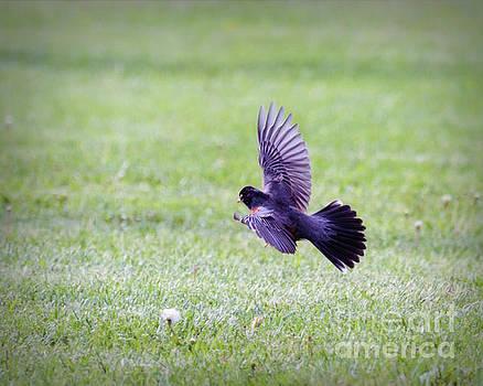 Wings of a Robin by Kerri Farley