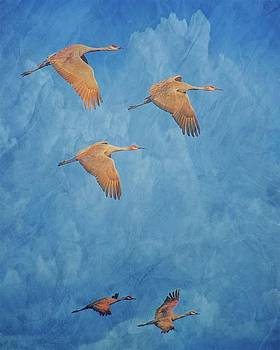 Wings of the Ancient, Sandhill Cranes by Flying Z Photography By Zayne Diamond